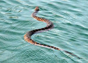 Снятся змеи в воде