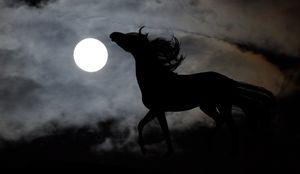 Лошадь во сне к чему снится, толкование по популярным сонникам