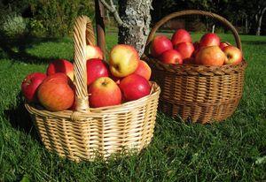 собирать яблоки в корзину