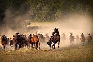 табун лошадей во сне