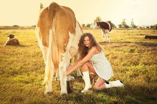 Видеть корову во сне