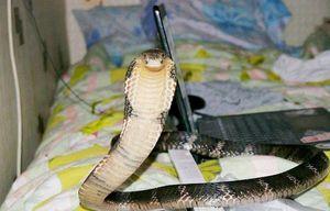 змея снится ребенку