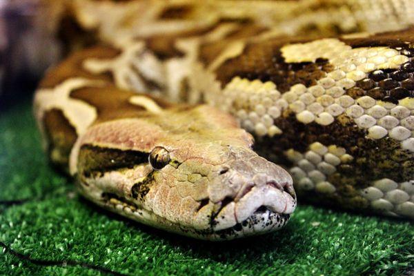 Змеи во сне к чему снятся