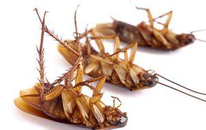 травить тараканов во сне