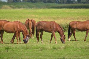 кони пасутся во сне